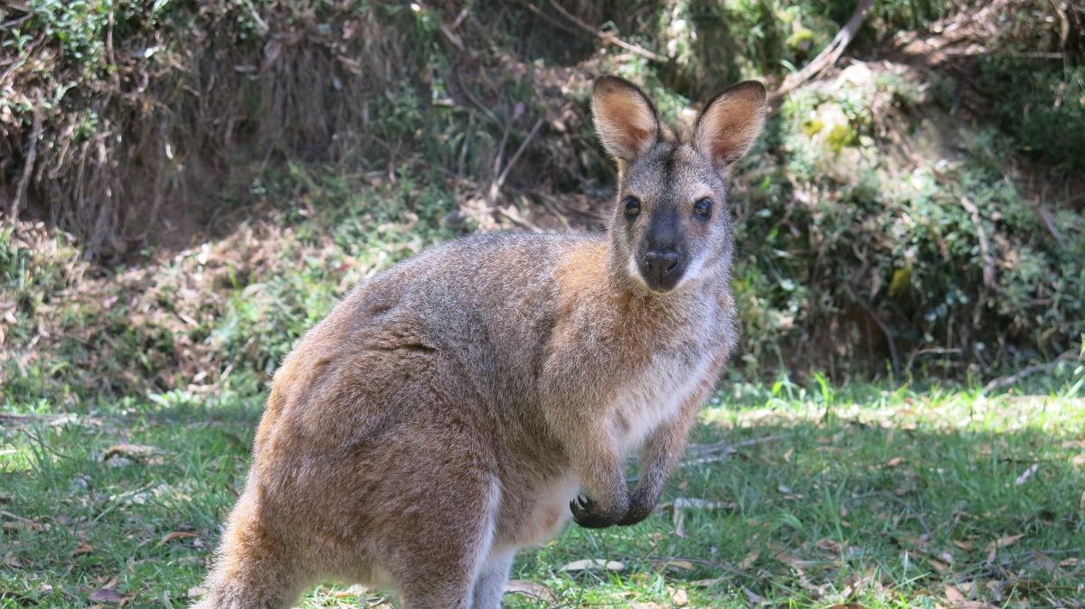 les 5 meilleurs visas pour rester en australie  u2013 dream job